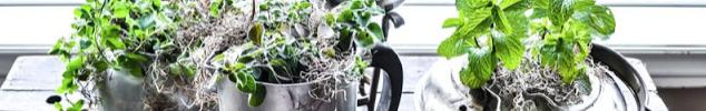 junk garden planters