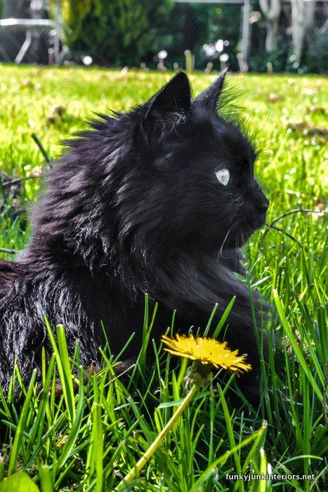 A cat in a dandelion filled field / Open letter to my dream farm  / FunkyJunkInteriors.net
