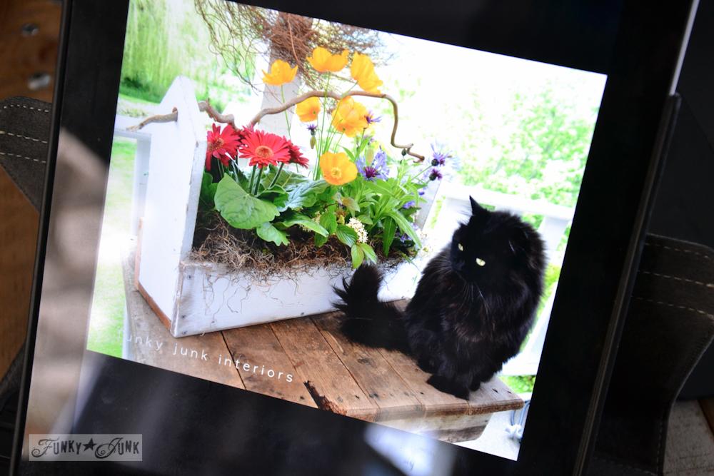 iPad for slideshow