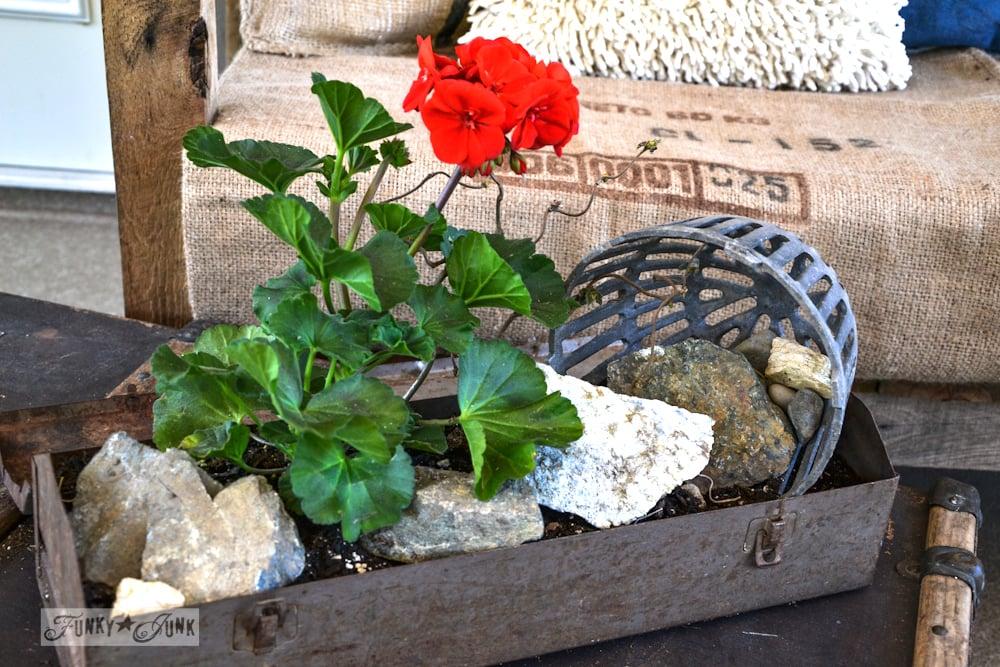 Toolbox junk planter box with red geranium via Funky Junk Interiors