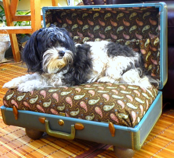 Vintage suitcase turned pet bed by DeJaVue Designs