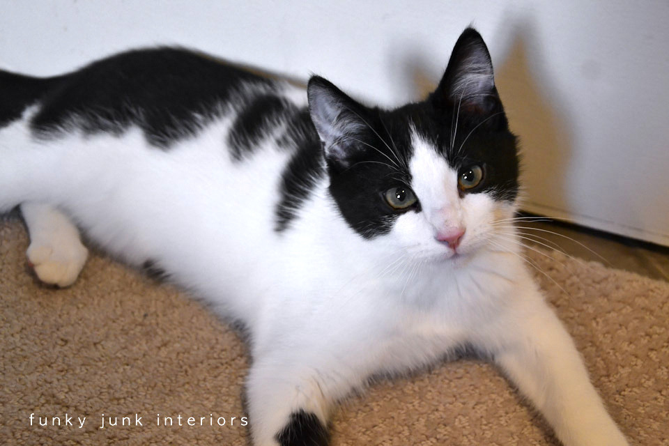 Black And White Cats Are Called