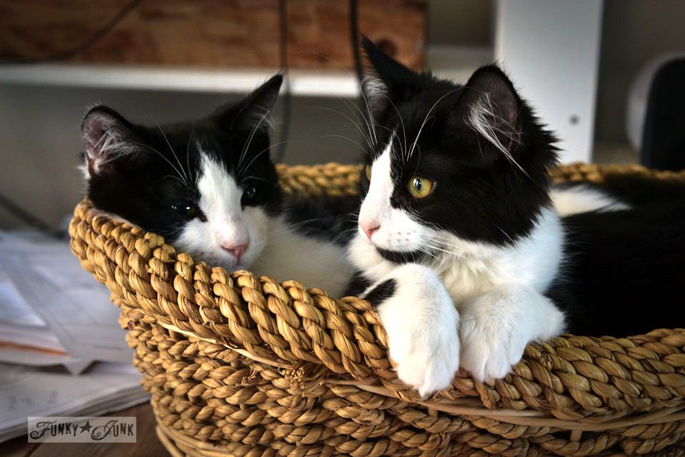 Funky Junk's cats in a basket
