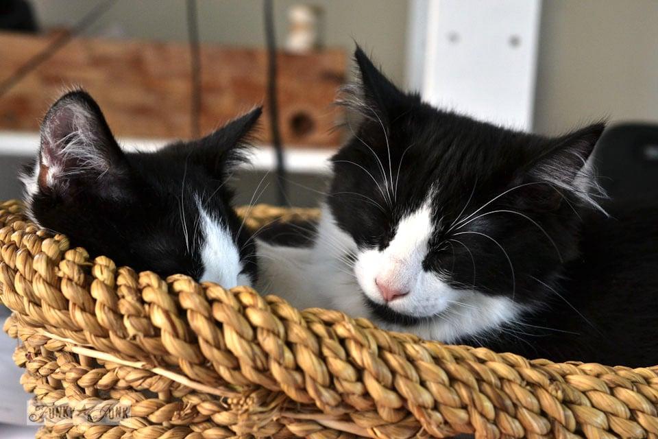 Funky Junk's tuxedo cats in a basket