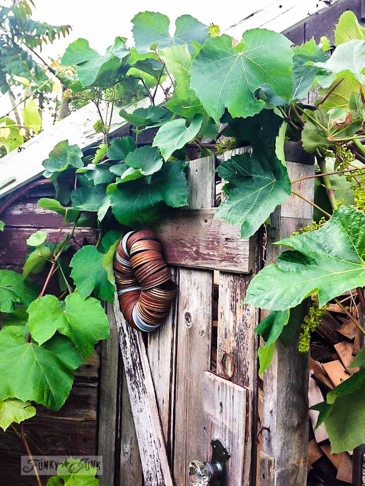 nature photography with an iPhone via Funky Junk Interiors - old shed with grapevine