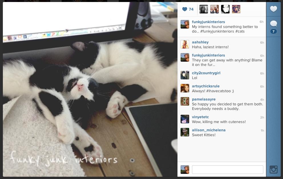 cat update on Funky Junk's Instagram
