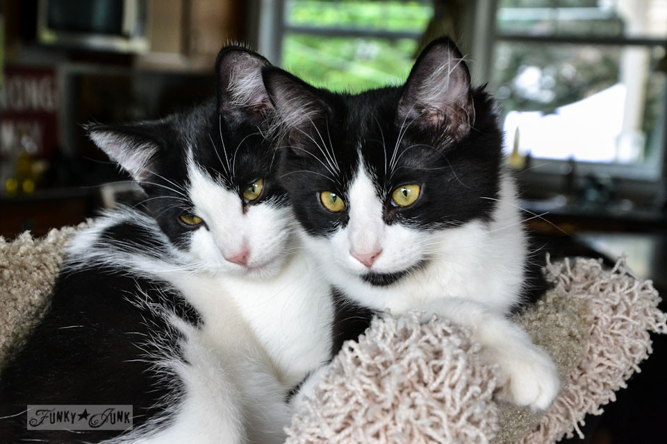 Cats in a cat tree - an update on Funky Junk's kittens