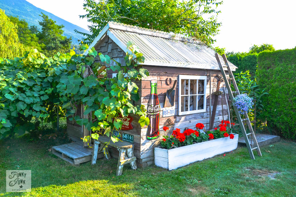 Rustic shed gone grapevine mad via http://www.funkyjunkinteriors.net/