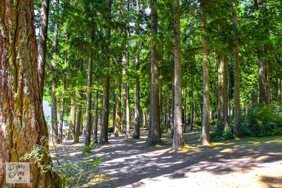 If I lived near Cultus Lake - I'd get lost in a sea of tree trunks in the forest