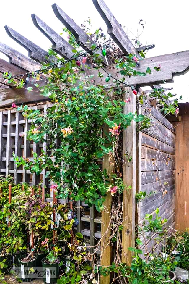 Vines and lights on trellis  / Reclaimed garden features at a Hope garden centre via https://www.funkyjunkinteriors.net/