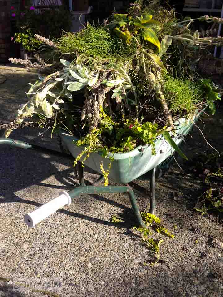 Wheelbarrow full of weeds during a garden gone wild therapy session via  https://www.funkyjunkinteriors.net/