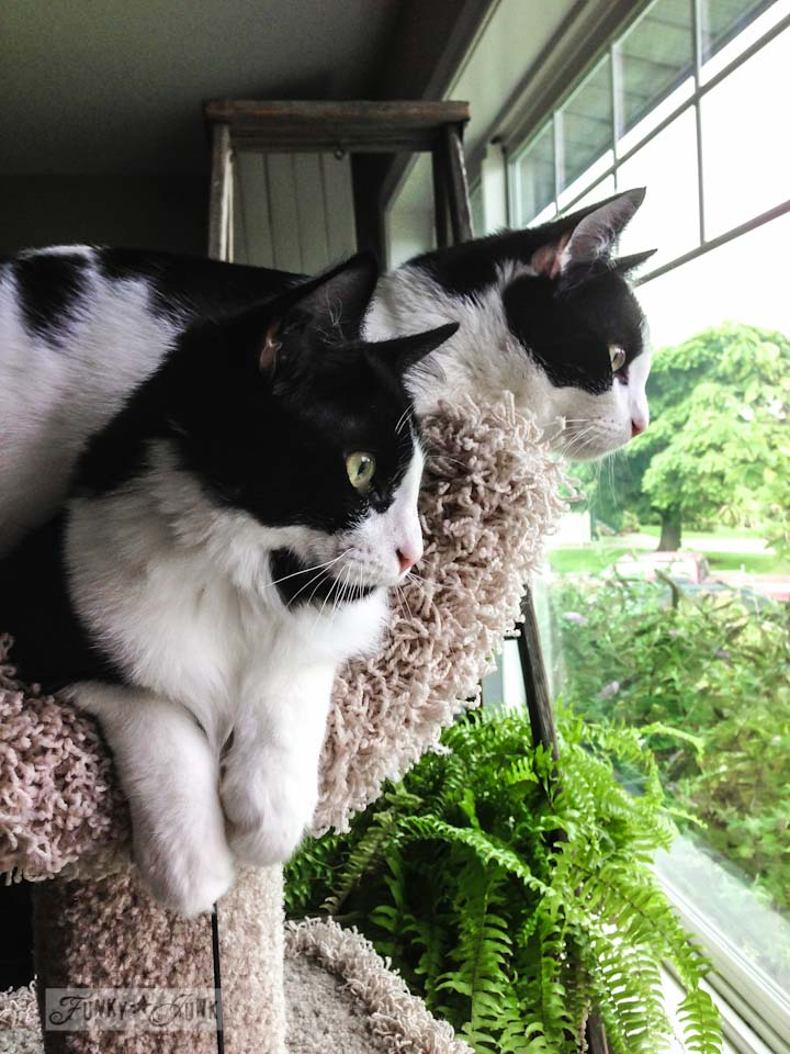 Two fat cats sharing a too tiny cat tree while cat watching via https://www.funkyjunkinteriors.net/