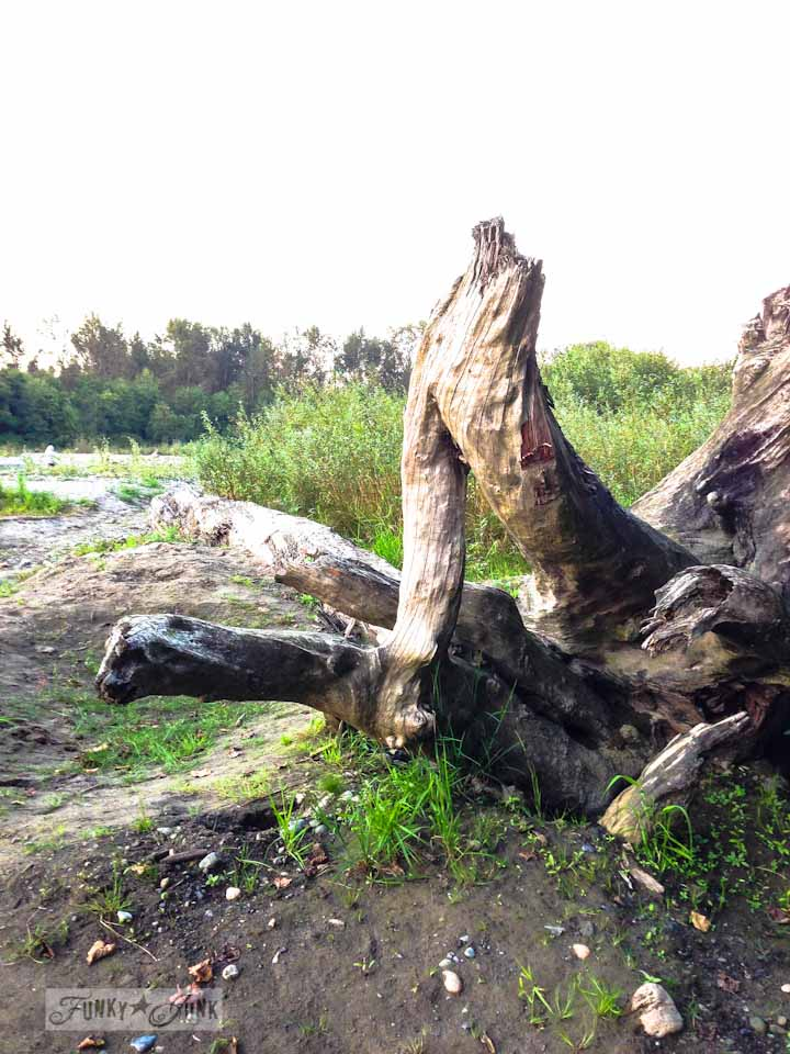 Fallen driftwood tree at the river, part of Walks and Dinner that the River, via : https://www.funkyjunkinteriors.net/