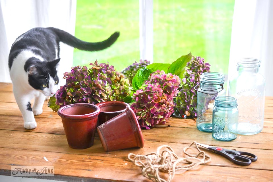 Tuxedo cat Lake, fall hydrangeas and aqua mason jars / part of Playing with fall hydrangeas and a (very) blue chair via https://www.funkyjunkinteriors.net/
