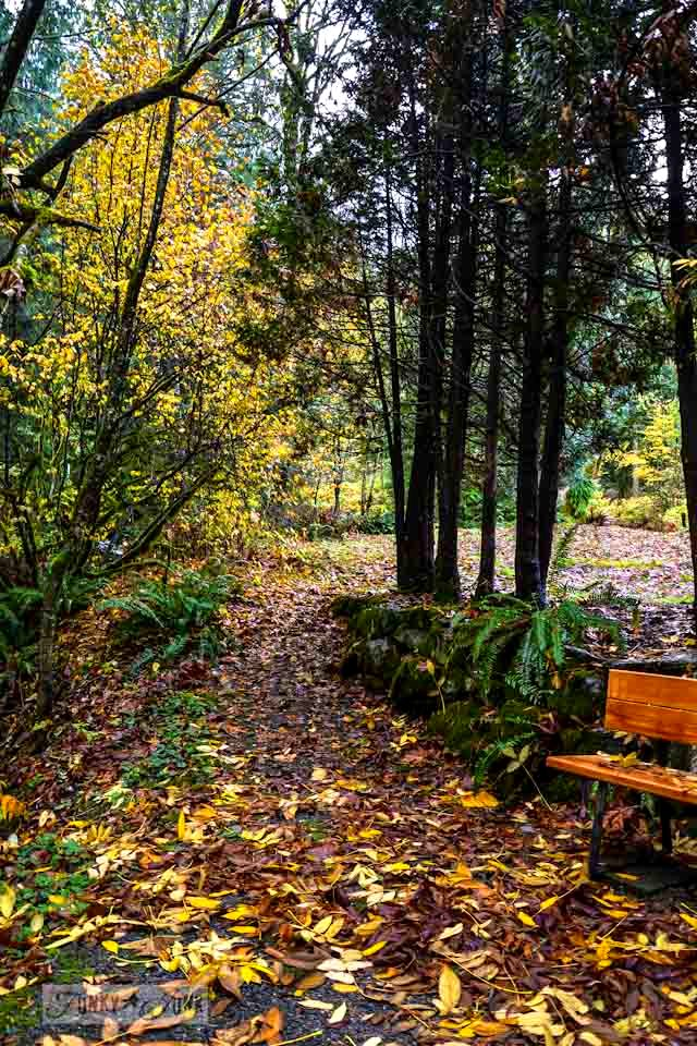 Unplugging and retreating at Charis Camp - fall photography and an experience via https://www.funkyjunkinteriors.net/