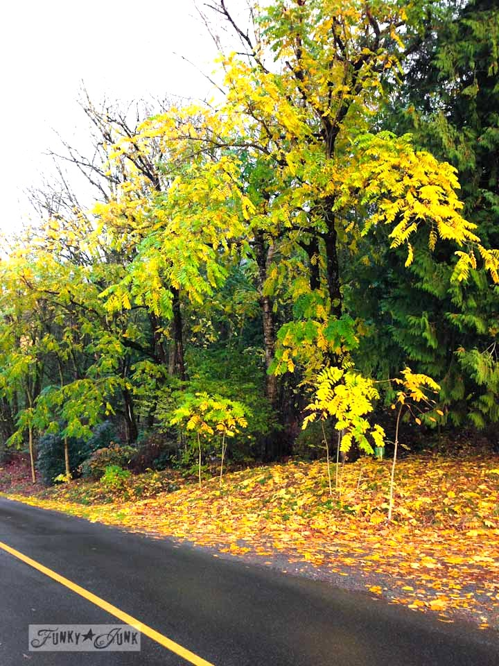 Fall trees up a mountain road / Fall walking up Majuba Hill via https://www.funkyjunkinteriors.net/