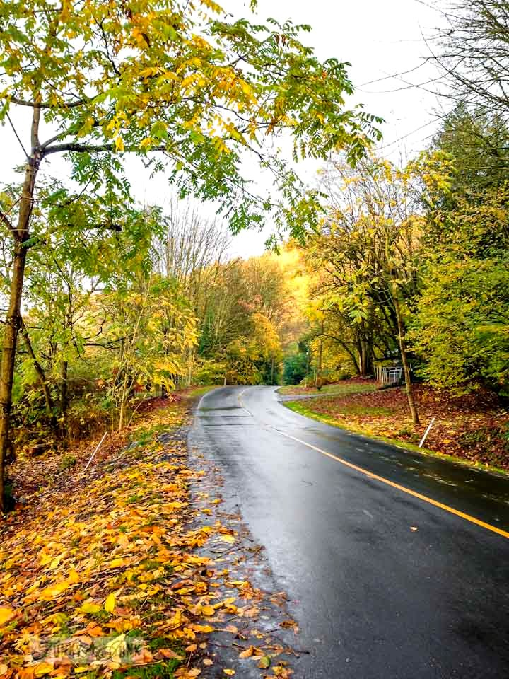 Fall walk in a road / part of 6 reasons why we joined a real gym via FunkyJunkInteriors.net