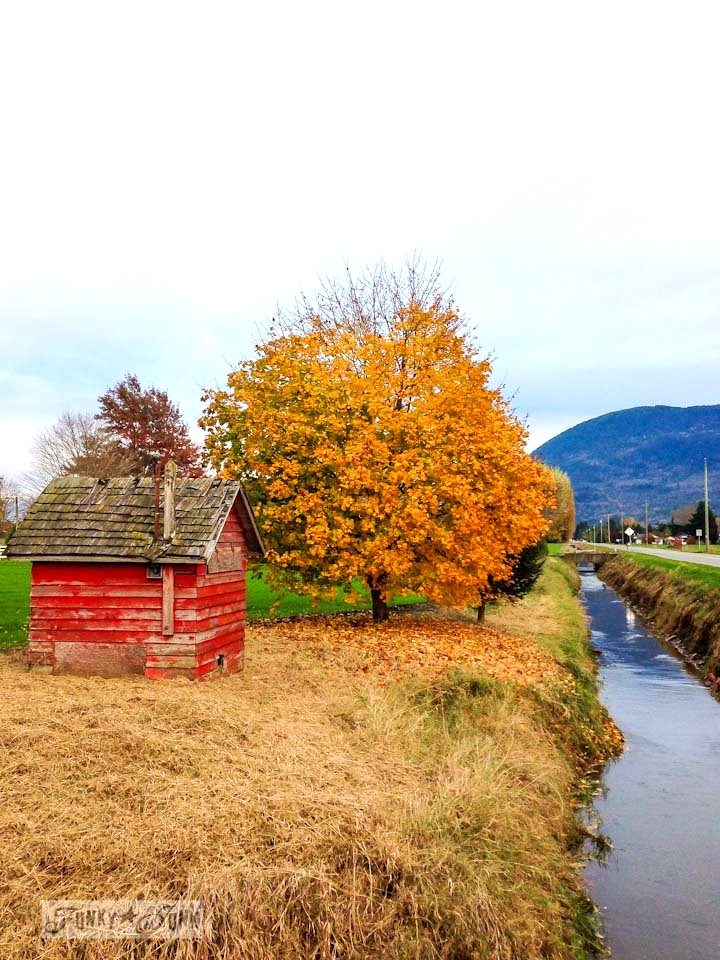 Little red shed by a creek / Fall trees up a mountain road / Fall walking up Majuba Hill via https://www.funkyjunkinteriors.net/