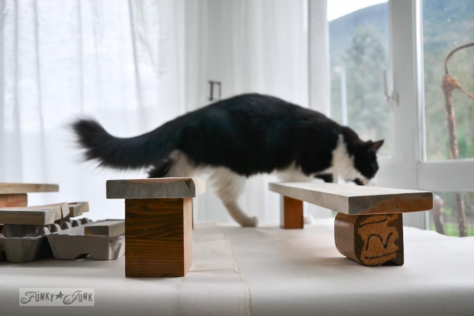 Tuxedo cat climbing over unpainted wood / When cats photobomb via FunkyJunkInteriors.net