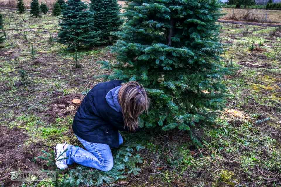 Cutting down the tree / Landing the perfect walking tree at Woodsong Christmas Trees - our adventure on visiting a tree farm for the first time  via https://www.funkyjunkinteriors.net
