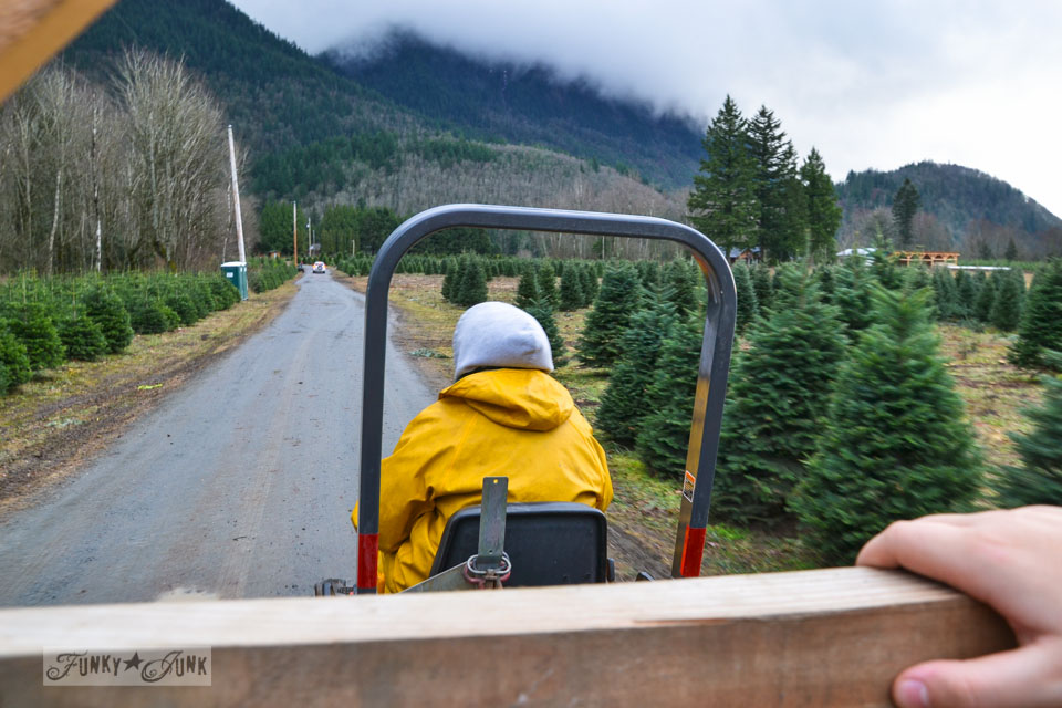 Landing the perfect walking tree at Woodsong Christmas Trees - our adventure on visiting a tree farm for the first time  via https://www.funkyjunkinteriors.net
