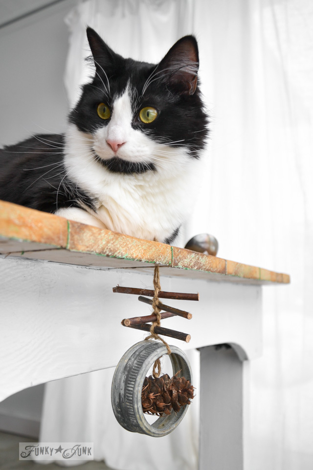 Tuxedo cat photobomb and twig garland / When cats photobomb via FunkyJunkInteriors.net