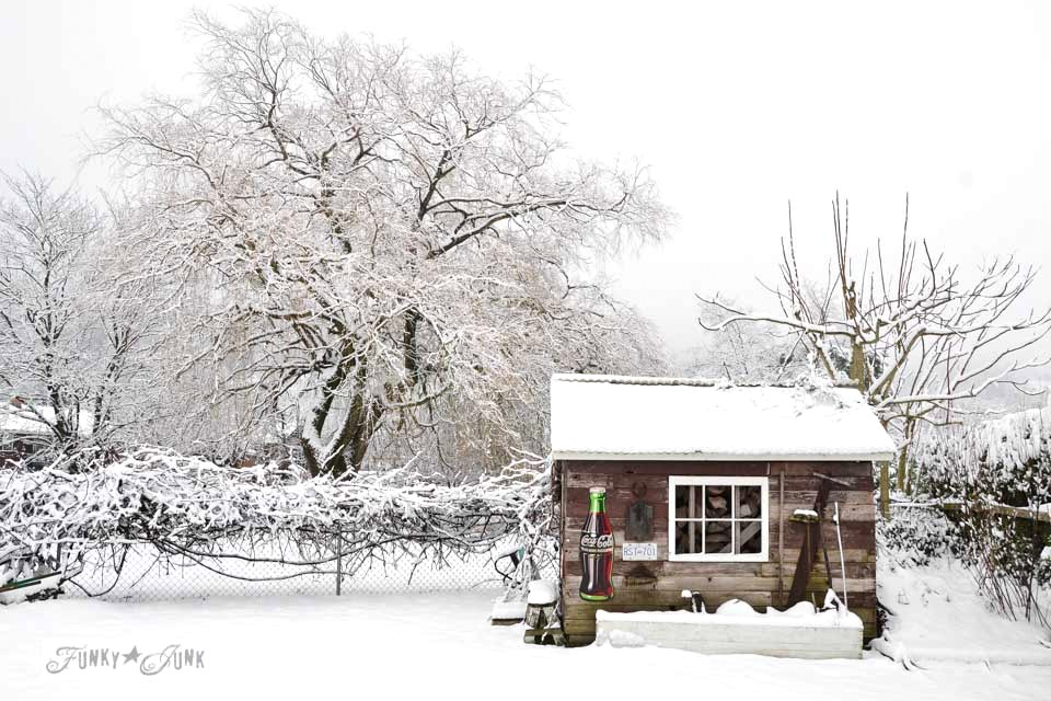 Rustic garden shed with grapevine in winter on FunkyJunkInteriors.net