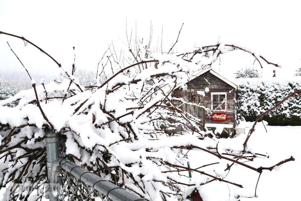 A Merry Christmas winter wonderland shed - a pretty photoshoot of a rustic shed covered in a blanket of snow via https://www.funkyjunkinteriors.net/