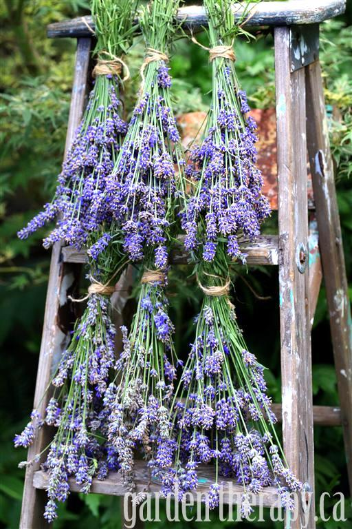 Dried flower ladder by Garden Therapy