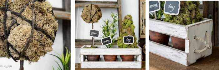 How to make inspiring moss topiaries in a crate via FunkyJunkInteirors.net