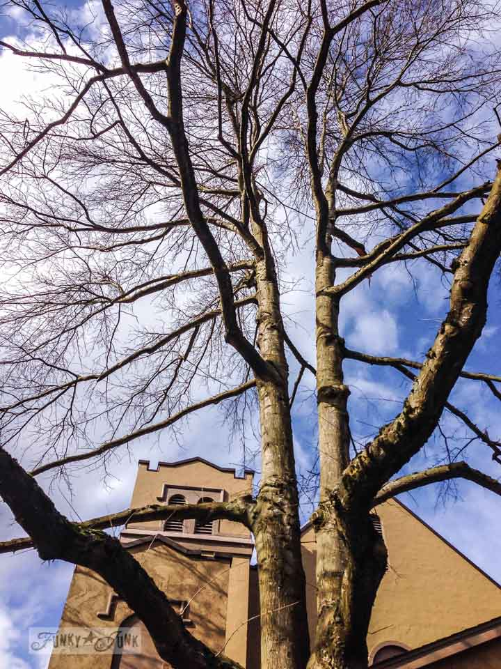 Lynden trees / An impromptu family day in Washington via FunkyJunkInteriors