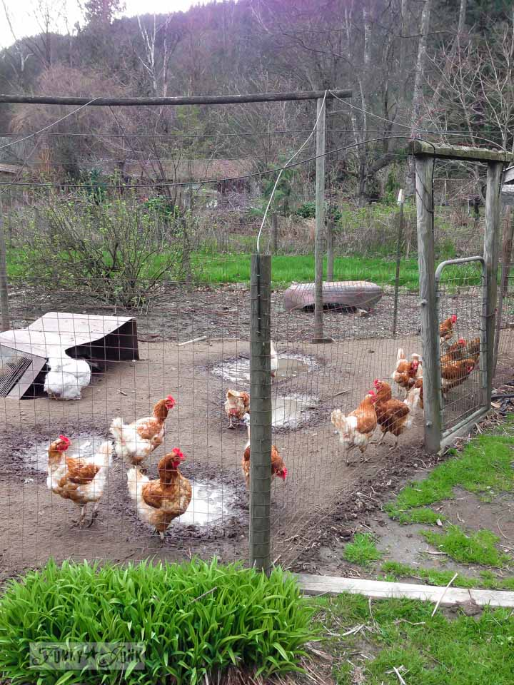 Hobby farm with chickens / part of 3 days of fabulous junk shopping via FunkyJunkInteriors.net
