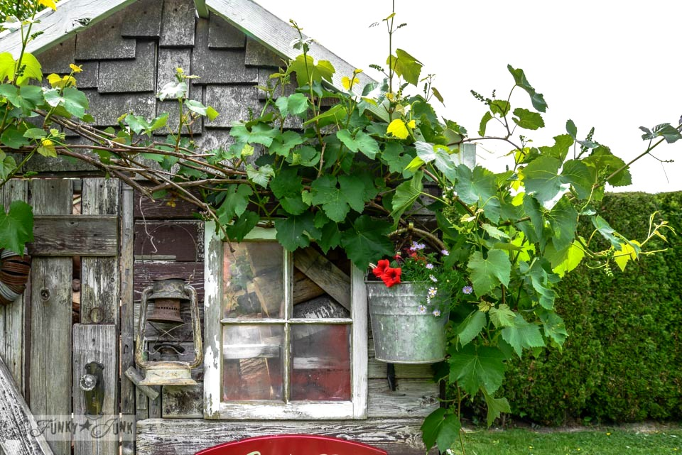 Galvanized flower pot bucket / Rustic garden shed with old signs, tools and a grapevine, on FunkyJunkInteriors.net