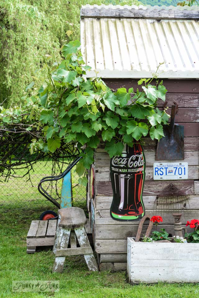 Large Coca Cola bottle sign / Rustic garden shed with old signs, tools and a grapevine, on FunkyJunkInteriors.net
