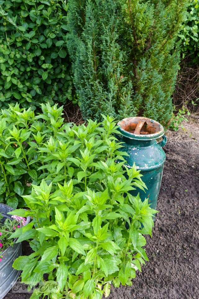 Get a full flowerbed with less - plus other garden cheater tips! Covers mulching, cutting edges, decorating with junk, etc. via FunkyJunkInteriors.net