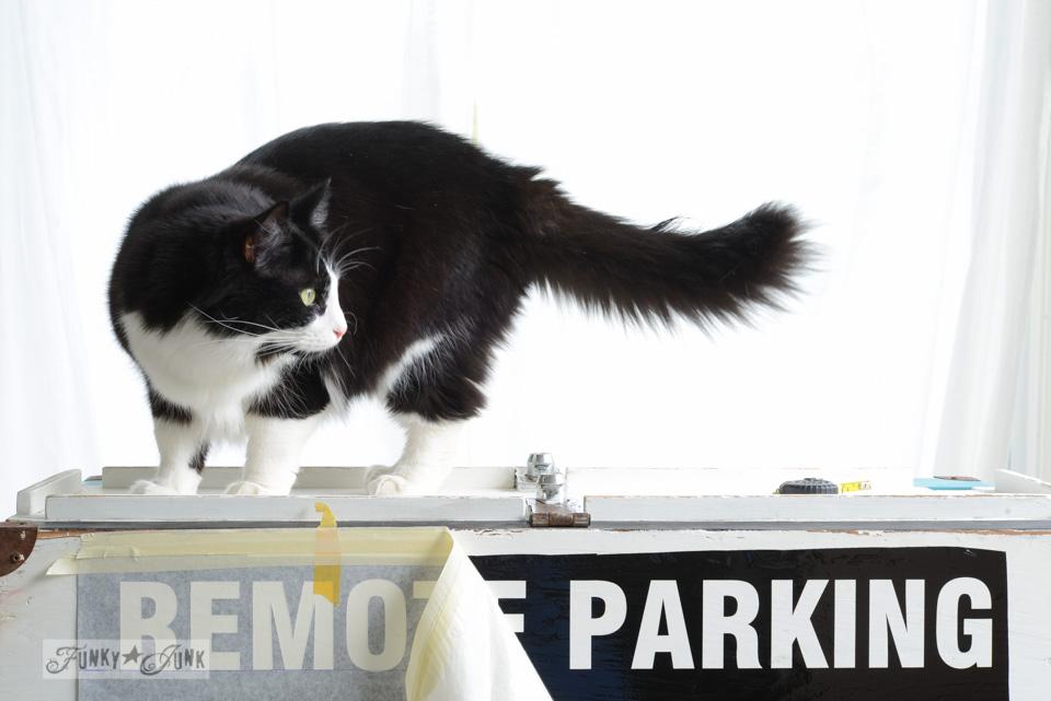Tuxedo cat on a vintage toolbox