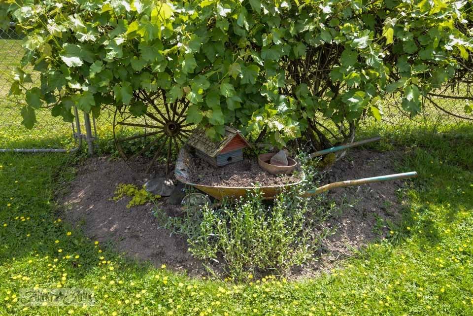 Wheelbarrow planter before / Living with a less than Pinterest worthy yard on FunkyJunkInteriors.net
