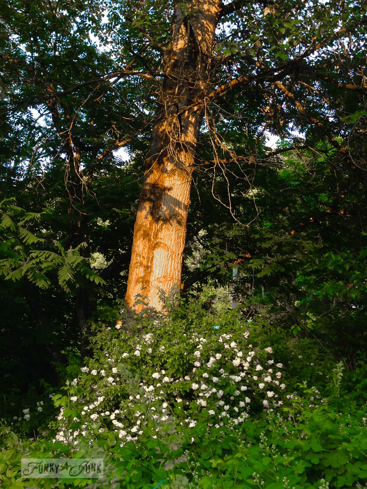 Flowering bush under a tree / part of Saved by a babbling brook (inspiration) on FunkyJunkInteriors.net