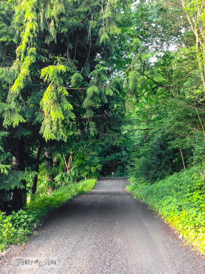 Gravel road in a forest / part of Saved by a babbling brook (inspiration) on FunkyJunkInteriors.net