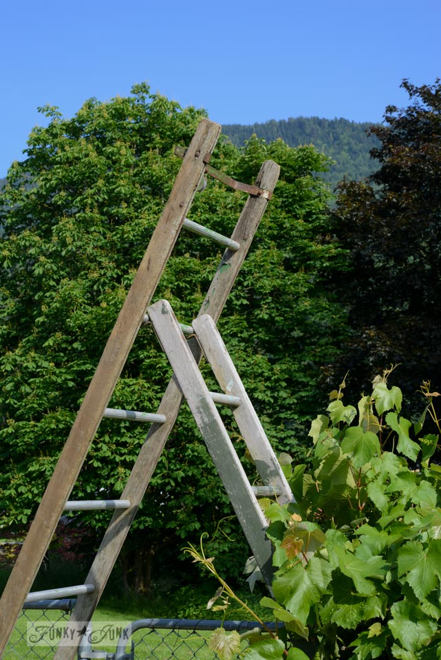 Make an old ladder garden arbour.. in minutes! via FunkyJunkInteriors.net