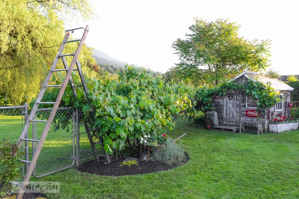 Old ladder arbour for garden via FunkyJunkInteriors.net