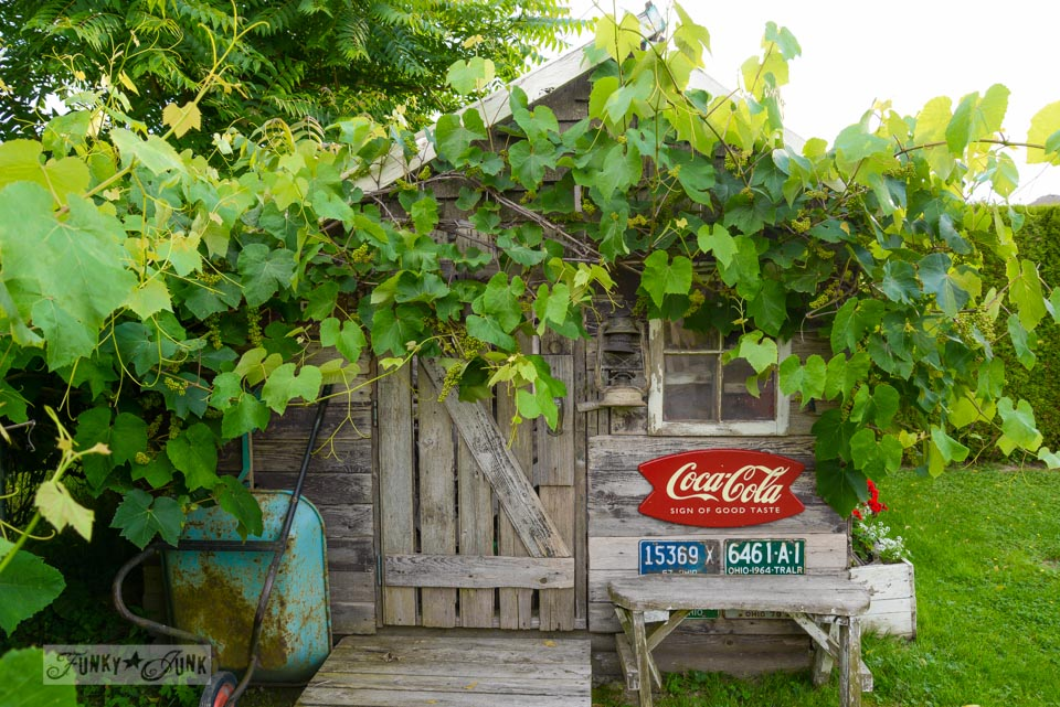 Grapevine on shed / If it weren't for those ever reliable blooming perennials... via FunkyJunkInteriors.net