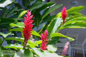 Hawaiian flowers-3