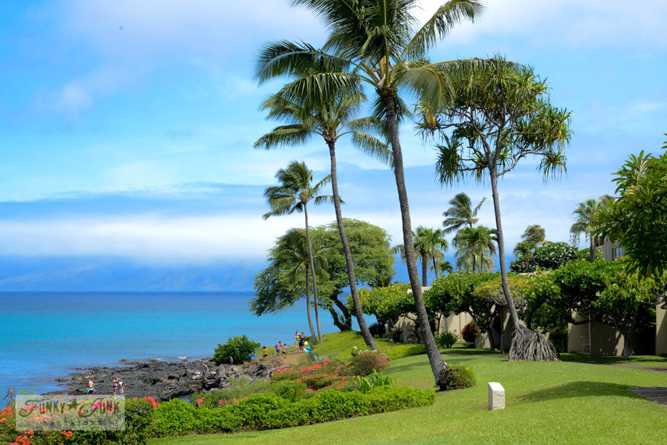 Napilii Point gardens in Maui / Hawaiian flowers on FunkyJunkInteriors.net