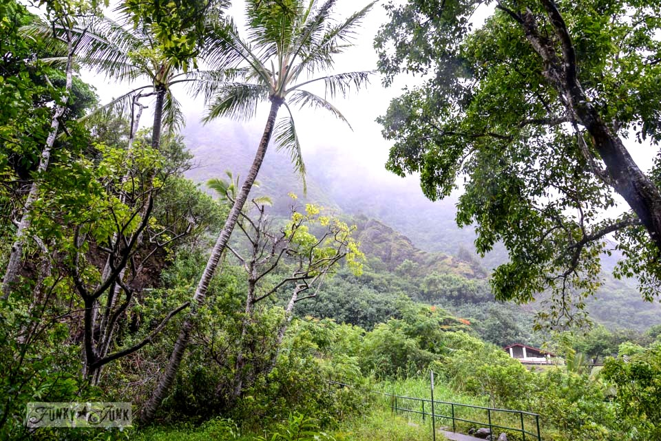A real rainforest experience at Iao Valley and Needle, in Maui. The place where it always rains! via FunkyJunkInteriors.net