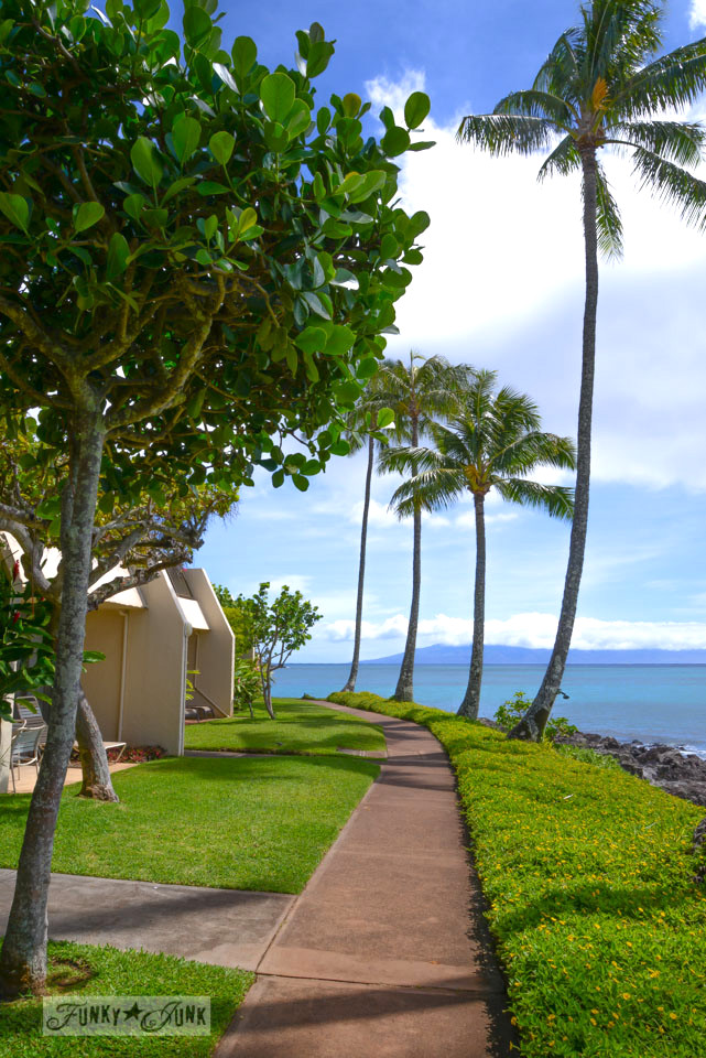 Our amazing stay at Napili Point, on the north shore of Maui / a post that totally photobombs you with gorgeous Maui eyecandy by FunkyJunkInteriors.net