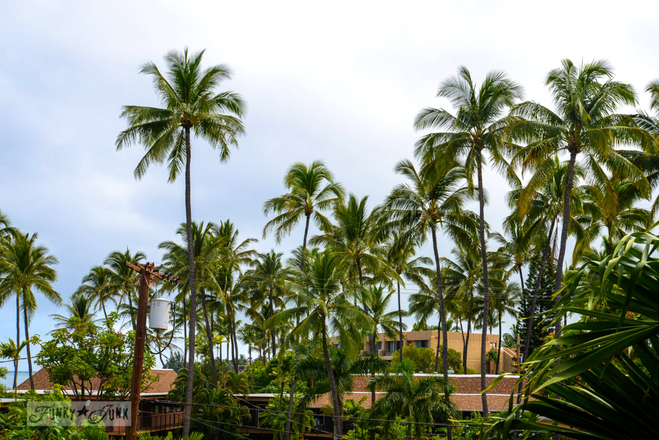 Palm trees / A tropical stay at Papakea Resort in Maui. Beautiful beach and sunset photos via FunkyJunkInteriors.net