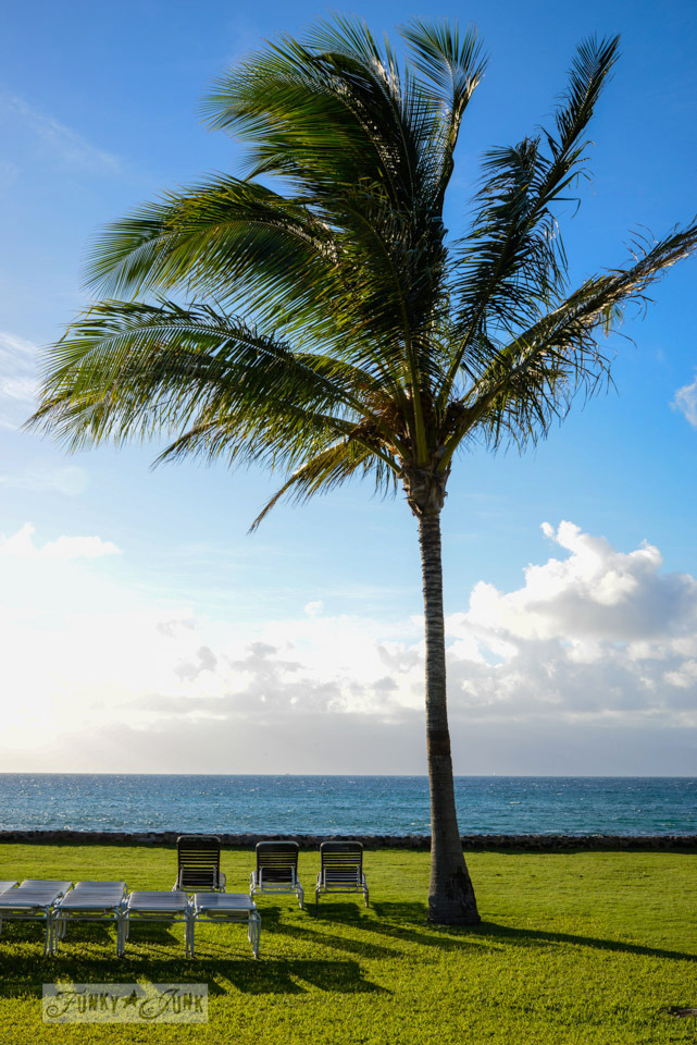 Palm tree on the beach / A tropical stay at Papakea Resort in Maui. Beautiful beach and sunset photos via FunkyJunkInteriors.net