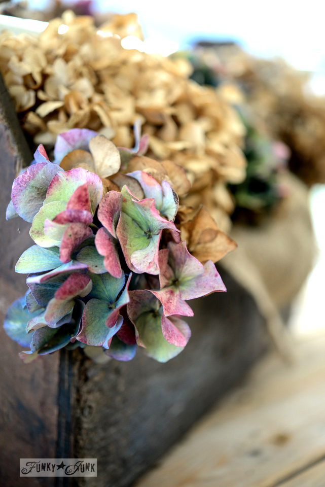Inspired by dried hydrangeas in a new toolbox via FunkyJunkInteriors.net