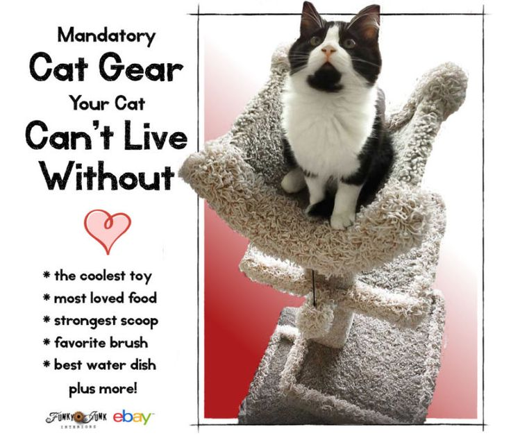 Mandatory Cat Gear your cat can't live without : Funky Junk Interiors